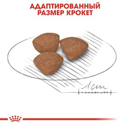 RC-SHN-Puppy-Mini-CV3_003_RUSSIA-RUSSIAN