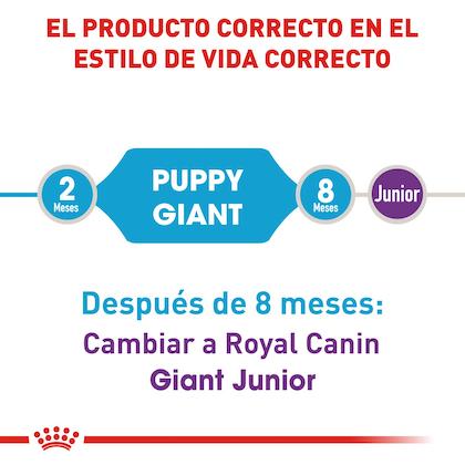 RC-SHN-PuppyGiant-CV-EretailKit-1
