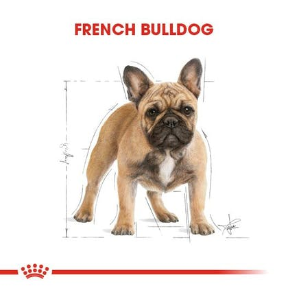 Royal Canin French Bulldog Adult Köpek Maması 1