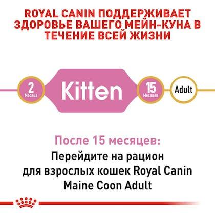 RC-FBN-KittenMaineCoon_2-RU.jpg