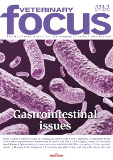 Gastrointestinal issues