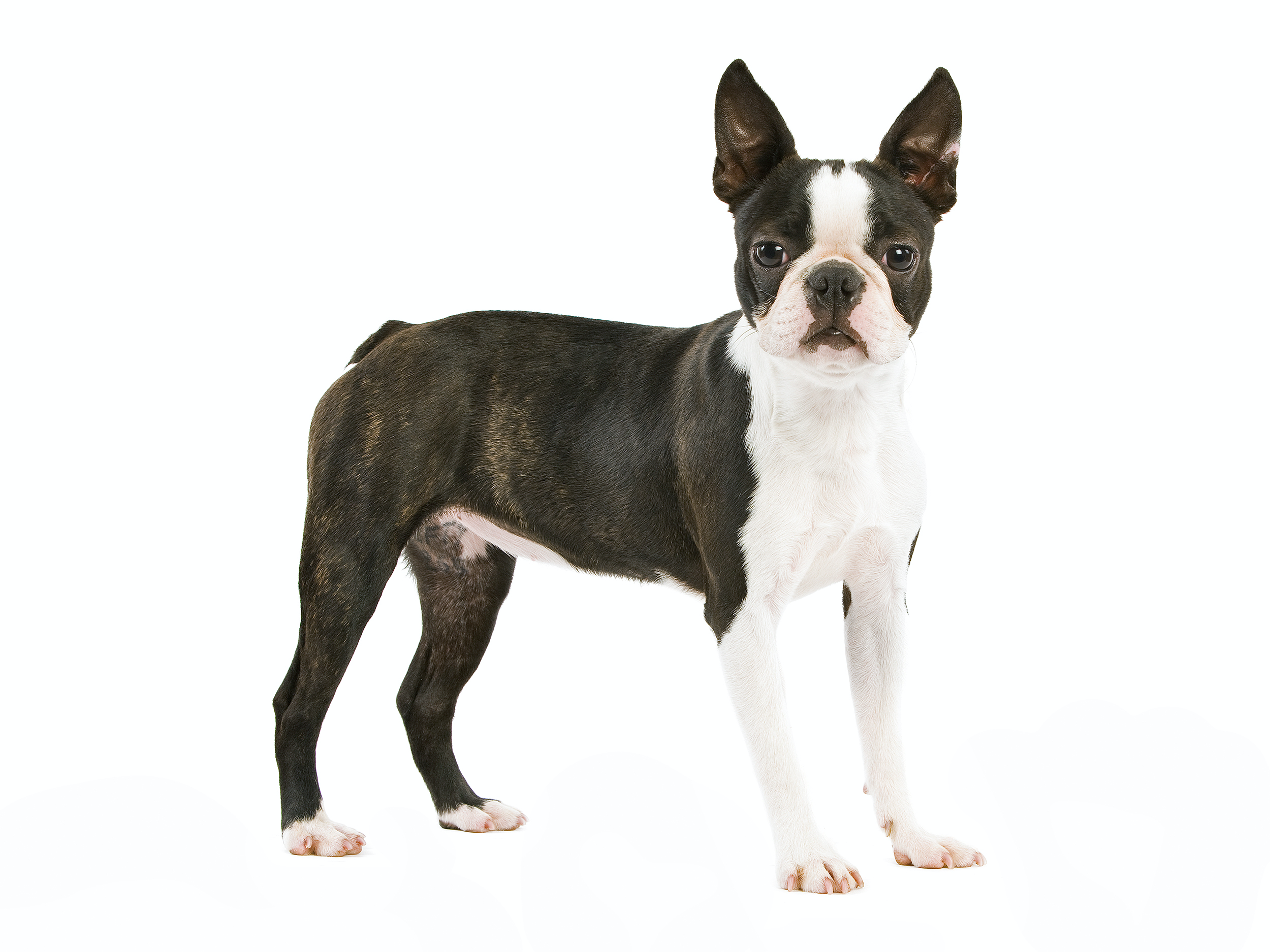 Dog Breed Library - Royal Canin