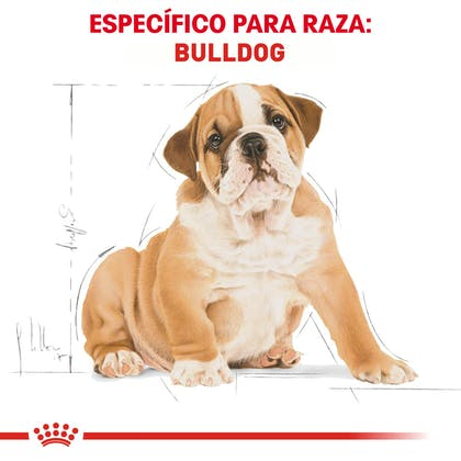 RC-BHN-PuppyBulldog-CM-EretailKit-4