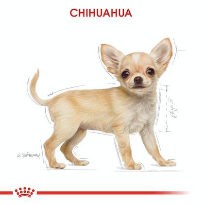 Royal Canin Chihuahua Puppy Yavru Köpek Maması 1