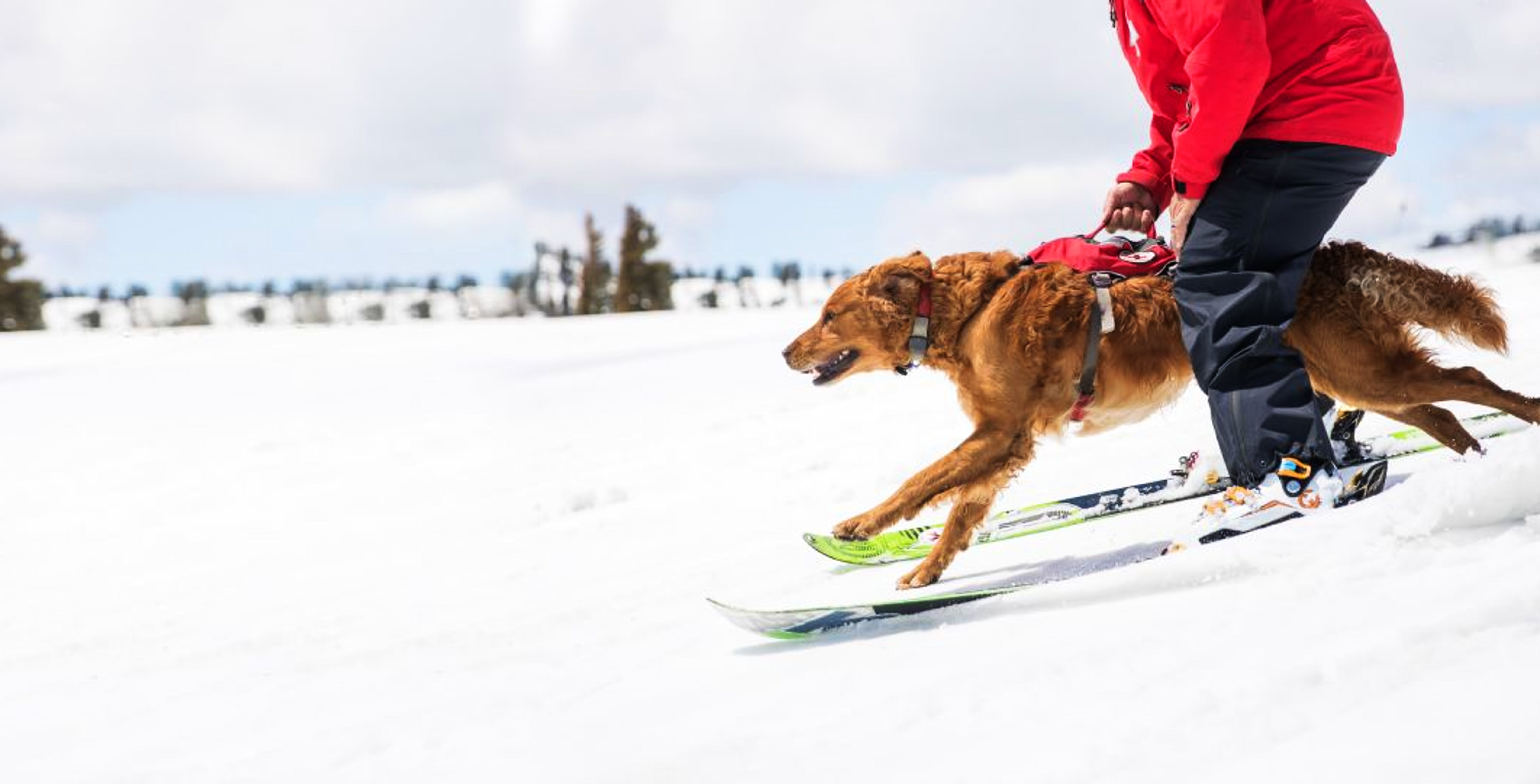 Mountain rescue dog with handler running down ski slope