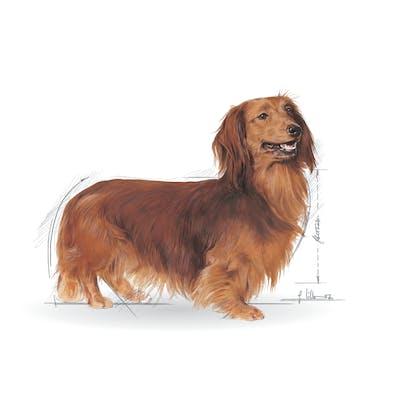 BHN 2012 - Part 1 - Emblematic pets pictures - DACH-AD-BHN-ILLUSTR