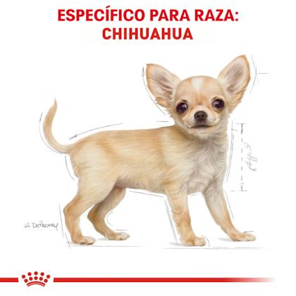 RC-BHN-PuppyChihuahua-CM-EretailKit-4