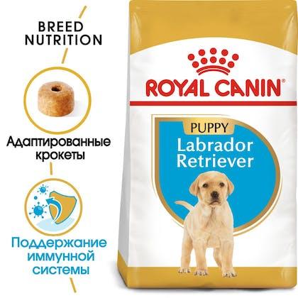 Labrador Puppy hero