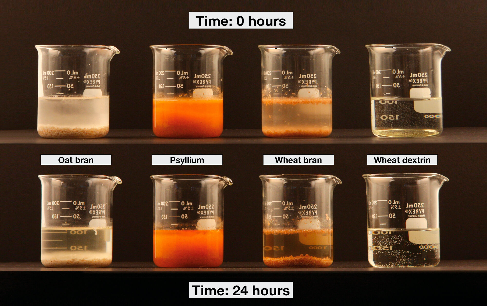 A demonstration of the solubility and viscosity of different fiber sources where equal amounts are added to 100 mL water. The oat and wheat bran do not absorb water and no changes are seen after 24 hours, whilst the wheat dextrin powder dissolves immediately and stays in solution. Psyllium powder absorbs water and forms a thick gel after 24 hours.