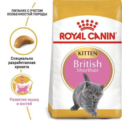 RC-FBN-KittenBritishShorthair_1-RU.jpg