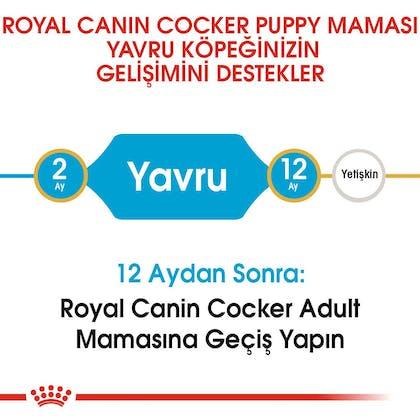 Royal Canin Yavru Köpek Cocker Puppy2