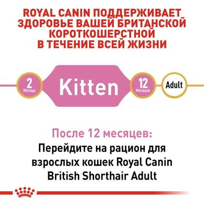 RC-FBN-KittenBritishShorthair_2-RU.jpg