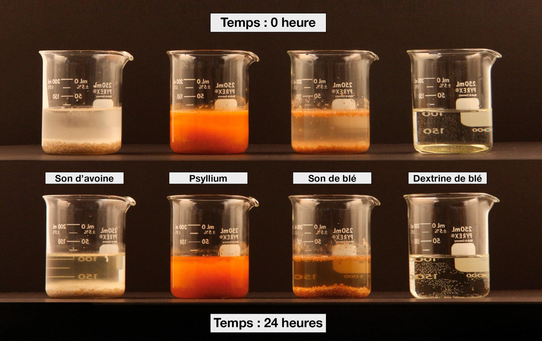 Démonstration de la solubilité et de la viscosité de différentes sources de fibres, ajoutées en quantités égales à 100 mL d'eau. Les sons d'avoine et de blé n'absorbent pas l'eau et aucun changement n'est observé après 24 heures, alors que la poudre de dextrine de blé se dissout immédiatement et reste en solution. La poudre de psyllium absorbe l'eau et forme un gel épais après 24 heures.