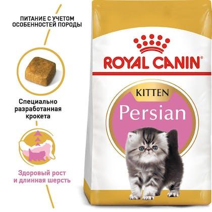 RC-FBN-KittenPersian_1-RU.jpg
