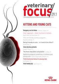 Pisici și pisici tinere