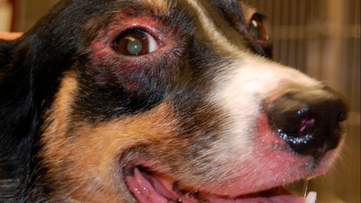 Persönliche Empfehlungen… Pododermatitis des Hundes