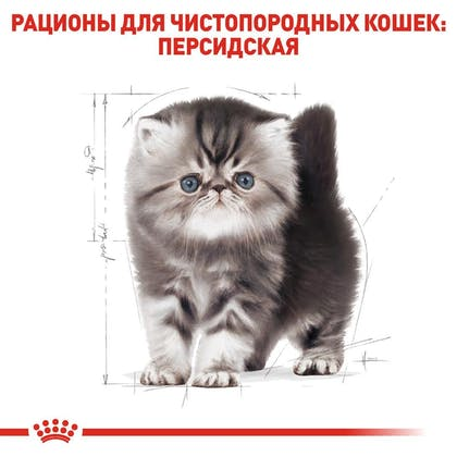 RC-FBN-KittenPersian_5-RU.jpg
