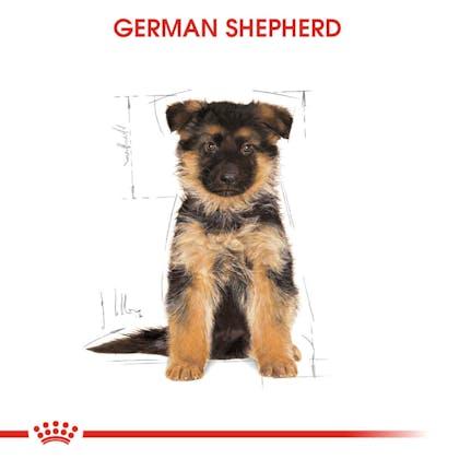 Royal Canin German Shepherd Puppy Yavru Köpek Maması  1
