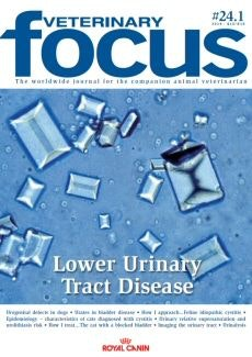 Lower Urinary Tract Disease