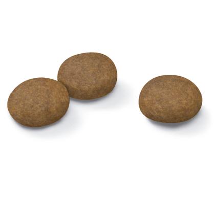 AR-L-Croqueta-Medium-Ageing-10+-Size-Health-Nutrition-Seco