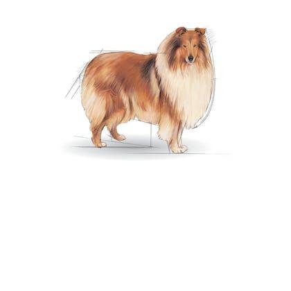Medium Maxi Giant POS 2012 Illustrations - MA-LIG-SHN-ILLUSTR