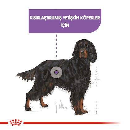Royal Canin Köpek Maxi Sterilised1
