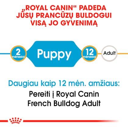 RC-BHN-PuppyFrenchBulldog-CM-EretailKit-1-lt_LT