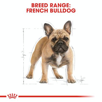BHN-FrenchBulldog-CV-Eretailkit-1