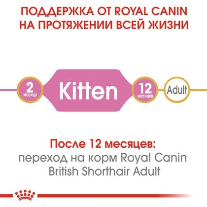 HI_FBN_BRITISH SHORTHAIR KITTEN_ru_1