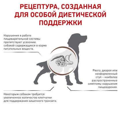 RC-VET-DRY-DogGastroHF-BrandFlagship_rus3