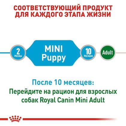 RC-SHN-Wet-MiniPuppy_2-RU.jpg
