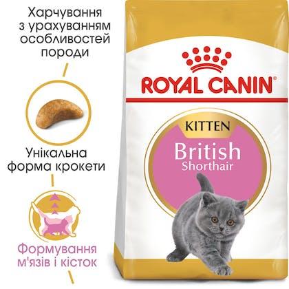 HI_FBN_BRITISH SHORTHAIR KITTEN_ua_4
