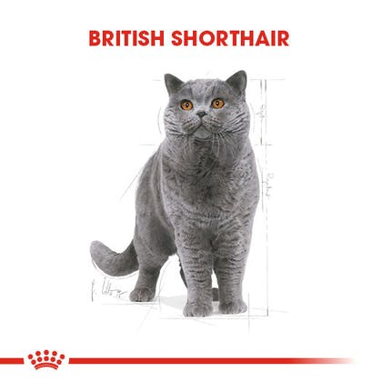 Royal Canin British Shorthair Adult Kedi Maması 1