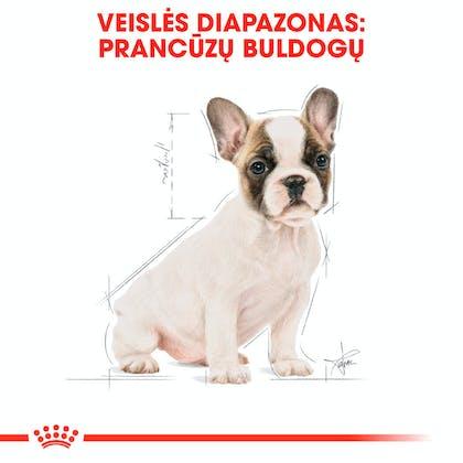 RC-BHN-PuppyFrenchBulldog-CM-EretailKit-4-lt_LT