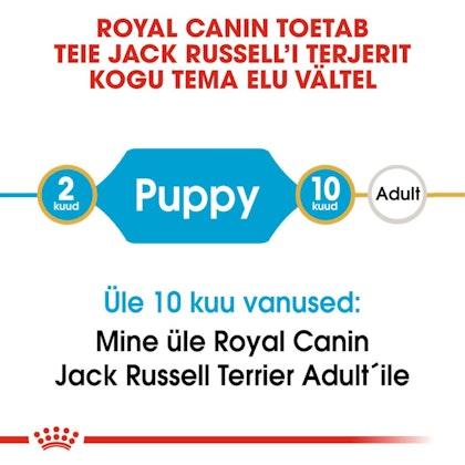 RC-BHN-PuppyJackRussell-CM-EretailKit-1-et_EE
