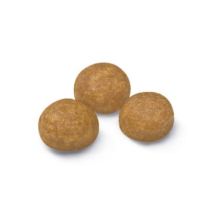 AR-L-Croqueta-X-Small-Adult-Size-Health-Nutrition-Seco