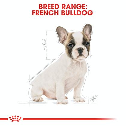 BHN-PuppyFrenchBulldog-CV-EretailKit-4