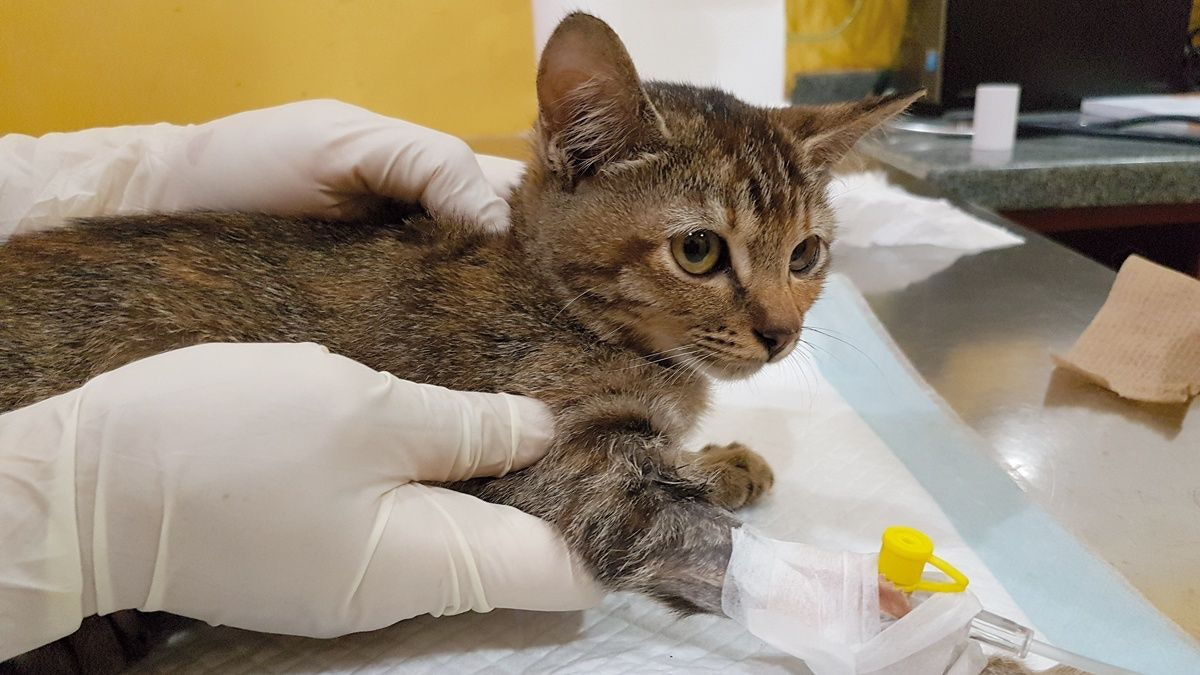 Soins intensifs chez les chatons
