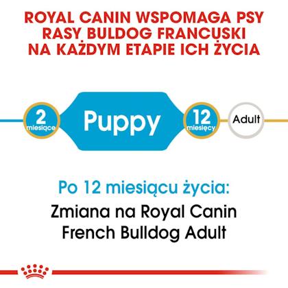 RC-BHN-PuppyFrenchBulldog-CM-EretailKit-1-pl_PL