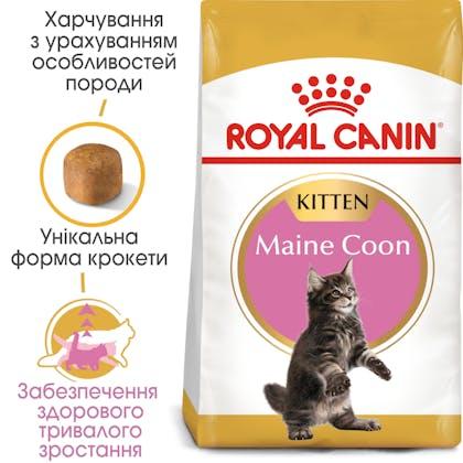 HI_FBN_MAINE COON KITTEN_ua_4