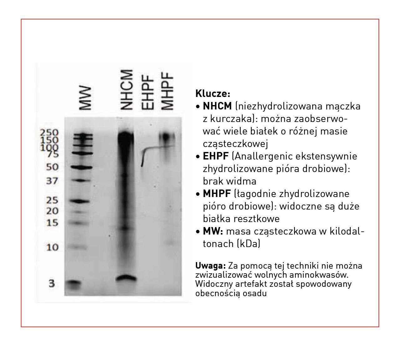 Elektroforeza białek z trzech różnych surowców pochodzenia drobiowego, w tym ekstensywnie zhydrolizowanego białka piór w dietach Anallergenic.
