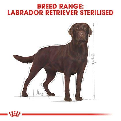 BHN-LabradorSterilised-CV-Eretailkit-1