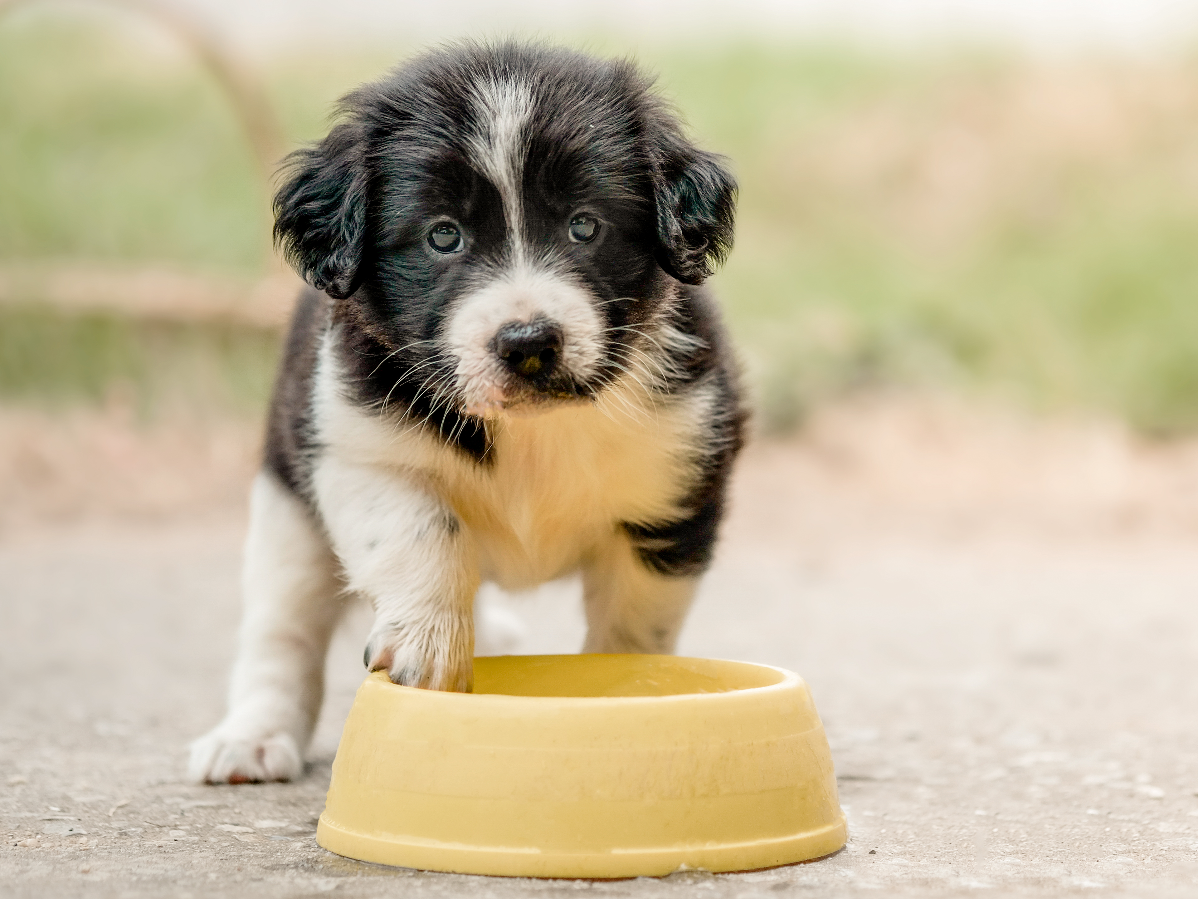 Puppy standing outdoors next to a feeding bowl