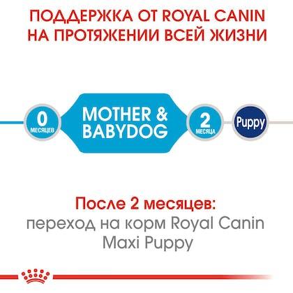 HI_SHN_MEDIUM_STARTER_MOTHER_BABYDOG_DRY_ru_1