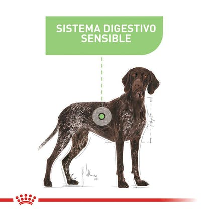 DIGESTIVE CARE MAXI COLOMBIA 4