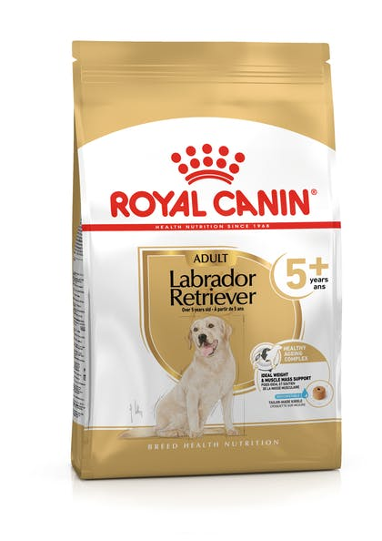 LABRADOR RETRIEVER 5+ PACKSHOT-B1-BHN20