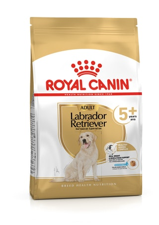 Labrador Retriever 5+