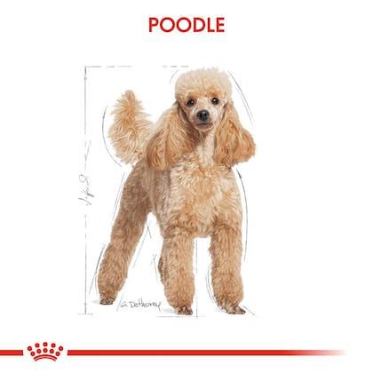 Royal Canin Köpek Poodle Yaş Mama1
