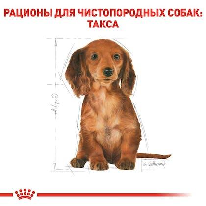 RC-BHN-PuppyDachshund_5-RU.jpg