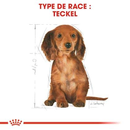 RC-BHN-PuppyDachshund-CM-EretailKit-4-fr_FR